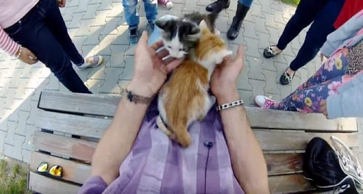 Young Biker Climbs Tree to Save Two Frightened Kittens – w/VIDEO