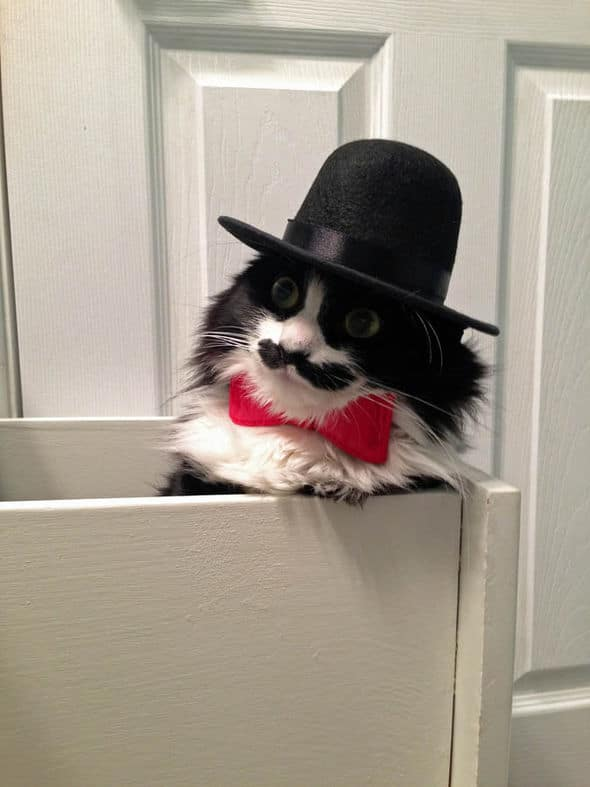 Muppet showing off her one of her top hats