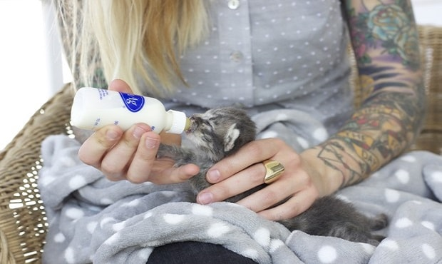 Shaw bottle feeds a young kitten. (Hannah Shaw)