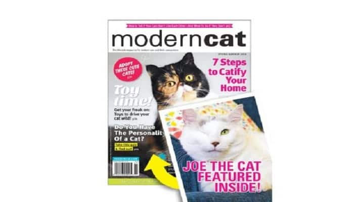Joe is set to feature in the latest issue of Modern Cat magazine.