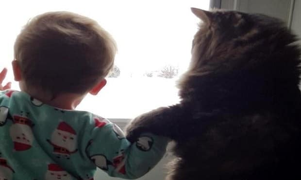 Gorgeous Maine Coon Cat and Her Little Human For Life!
