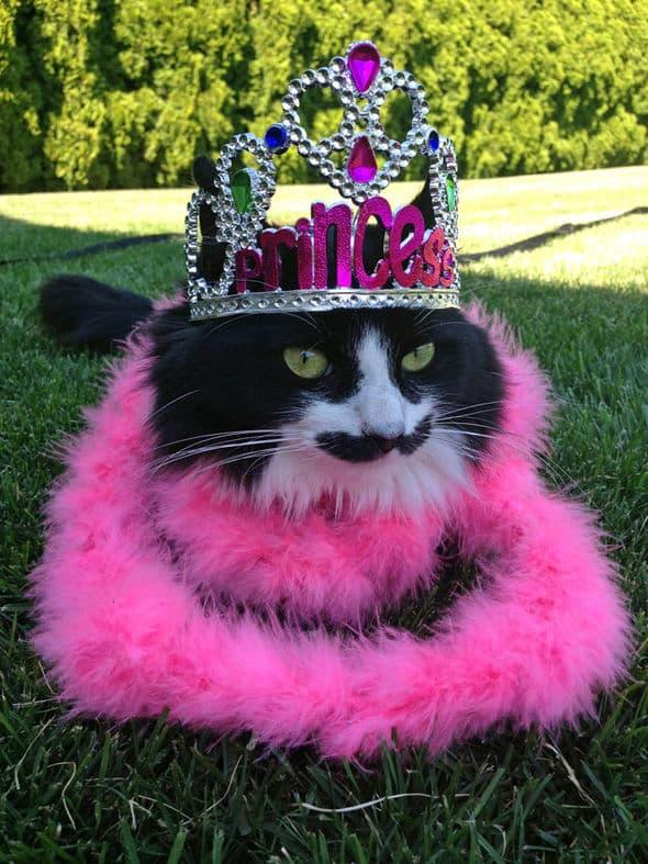 Muppet displays a glorious tiara