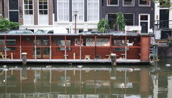 Amsterdam's Floating Sanctuary for Cats Called Simply ... The Cat Boat!