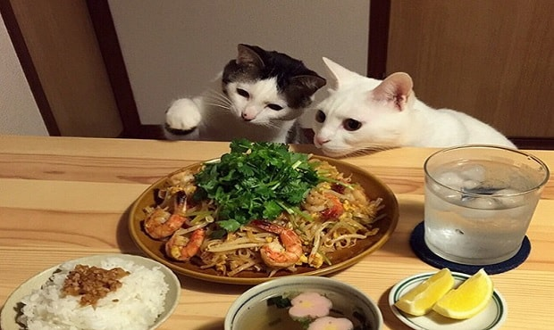 Hilarious Instagram Pics Of Cats Admiring What Their Humans Are About to Eat!