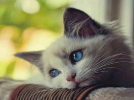 10 Common Things Cat Owners Do That Can Break a Cat's Spirit and Its Heart ...