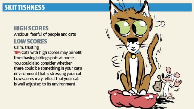 The skittish cat