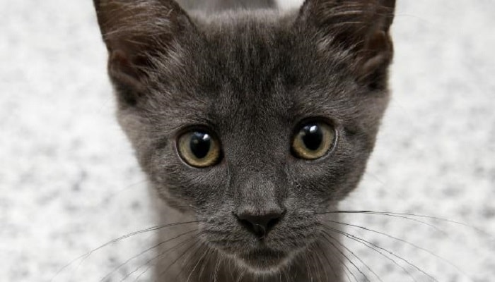 A kitten ready for adoption. Picture: Jerad Williams