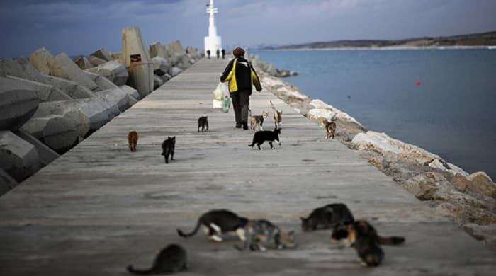 A woman walks at the marina after feeding cats in the southern city of Ashkelon, Dec. 7, 2009.  (photo by REUTERS/Amir Cohen)