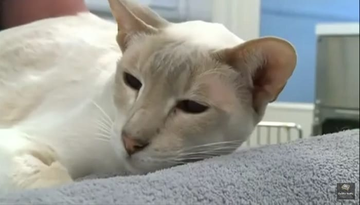 """""""Cat-in-the-Box"""" Survives Eight Days in Postal Transit"""