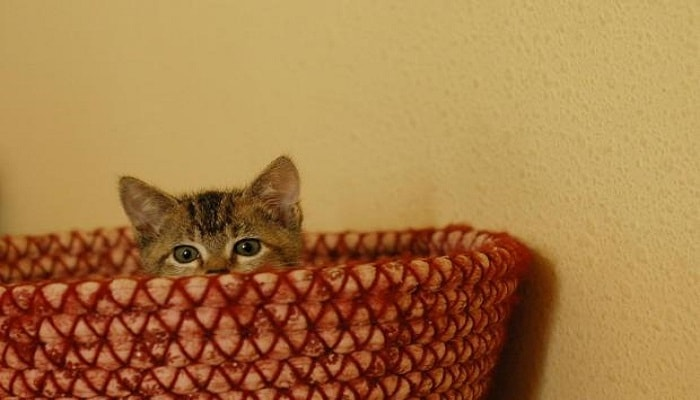 adorable-kitten-peeking-over-basket-edge1-min
