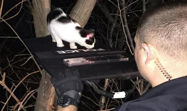 "Officer TJ Markowsky of the La Vista Police Department helps a cat cross a bulletproof shield ""bridge"" while another officer uses the red laser sight from a Taser to guide the feline. Photo by @ofctmarkowsky/Twitter"