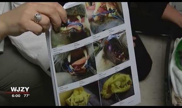 Cat's Jaw Broken at Rowan Co. Animal Shelter Has Been Deemed …