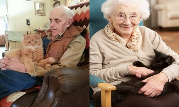 Program Matches Senior Citizens With Cats …