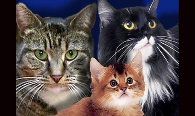 Sacramento SPCA Offering Free Spaying and Neutering Services, Click for More Info …