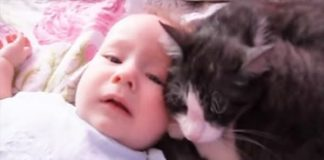 Compassionate Cat Soothes Crying Baby. - VIDEO