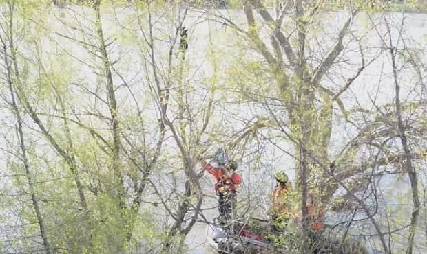 Two Cats Rescued From Sacramento River, Watch the Dramatic Rescue – VIDEO