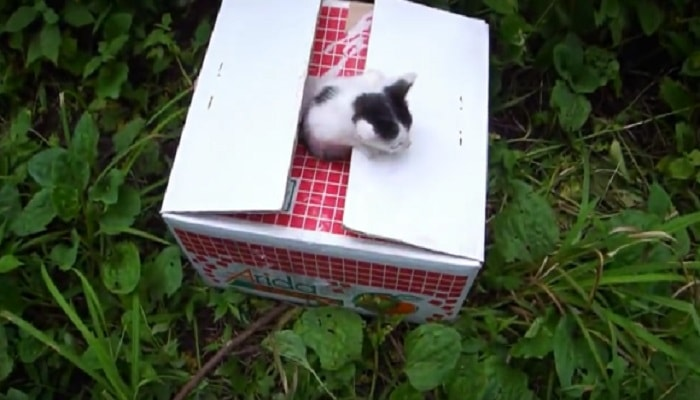 Compassionate Motorcyclist Discovers Box of Abandoned Kittens ... and Love Takes the Wheel! - VIDEO
