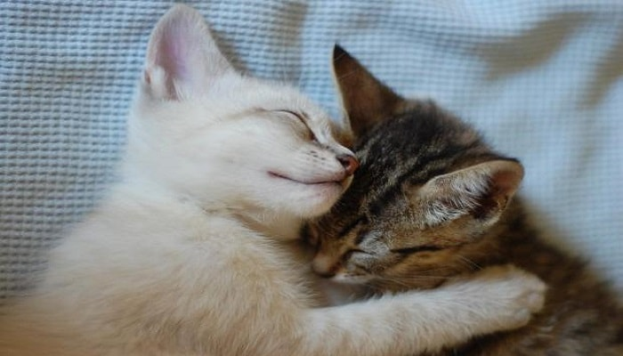 close-up-of-kittens-cuddling-on-blanket-min