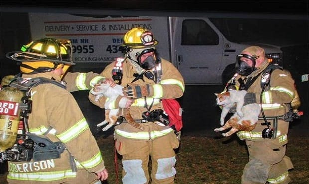 3 Cats Suffered Smoke Inhalation During House Fire in New Hampshire Today (Thursday)