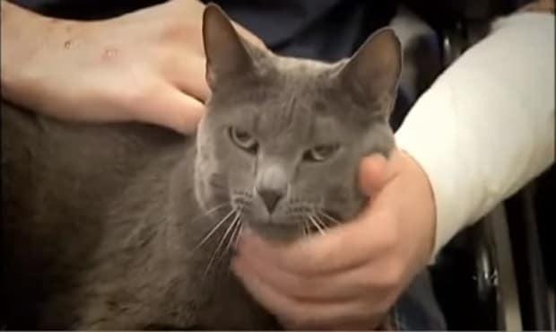 Man Falls into Diabetic Coma. His Cat Saves His Life!