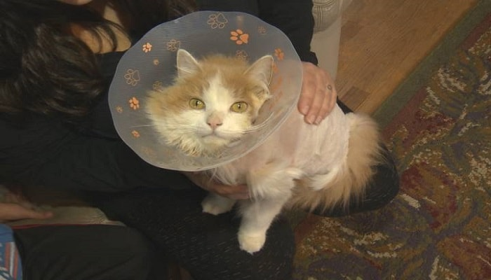 Lost Cat, Missing for Months, Toughs Out the Winter On His Own … and Has Just Now …