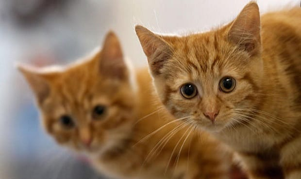 """HELP WANTED: """"Kitten Cuddlers"""" Wanted in Miami!"""