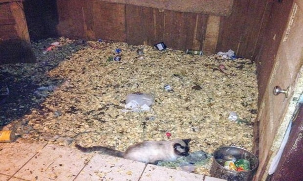 Over 100 Cats Rescued from Deplorable North Texas Home