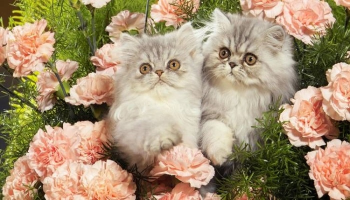 16 Plants/Flowers That Are Poisonous To Cats and Dogs