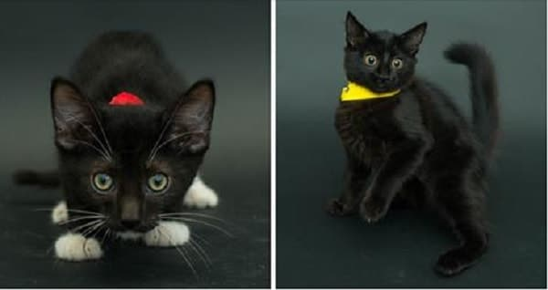 Photographer Donates Time and Effort to Help More Black Cats Get Adopted!