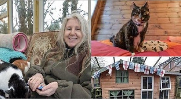 Cat Hotel Has Housed 3,000 + Rescue Cats and Has Costed  $608,000