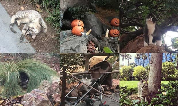 A Look into the Secret Lives of the Disneyland Cats!