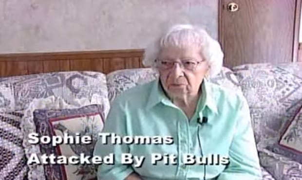 97-year-old Woman Saved by Her Calico Cat When 3 Pit-bulls Came to Attack - VIDEO
