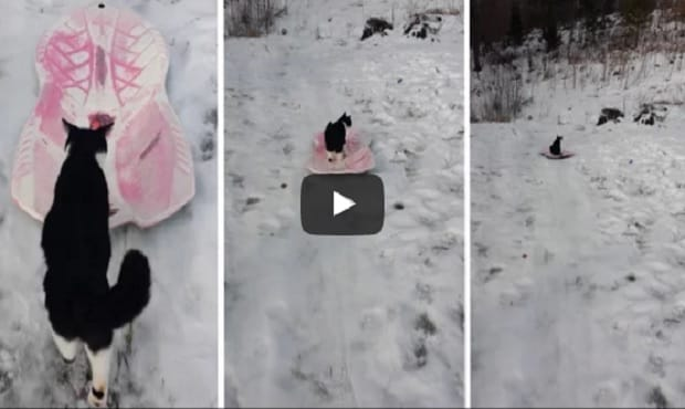 Kitty See, Kitty Do. If The Kids Can Do It, So Can I! – VIDEO