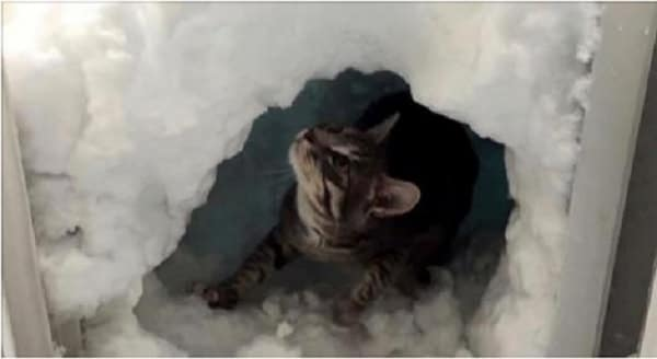 Cat Builds Own Igloo During Denver Snowfall! – VIDEO