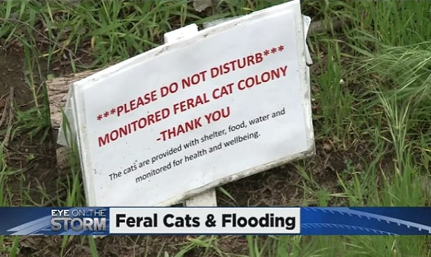State Worker in Sacramento Racing Against Time To Save Feral Cats From Rising River