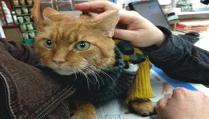 Tony the Hero Fire Cat – A Living Legend! – 2 VIDEOS!