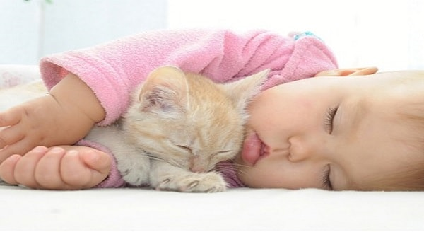 Kitties and Babies – Is It Safe for Them To Be Together?