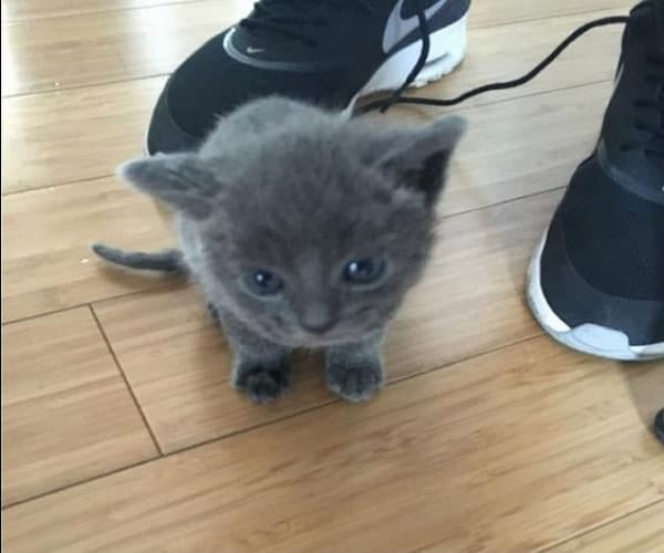 One of the rescued kittens NYPD / Twitter