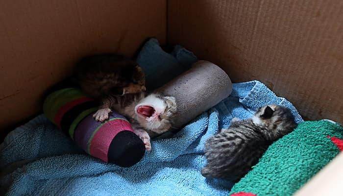 windjammer-kittens--1457999227-min