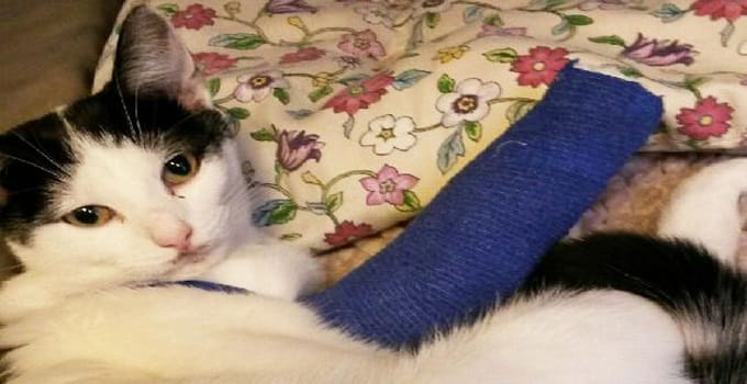Cat Miraculously Survives After Falling From High Balcony