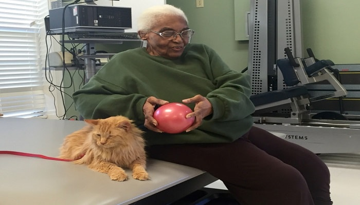 """Nala the Cat, Once a Rescue, Now Working Hard as a """"Therapy Cat."""""""