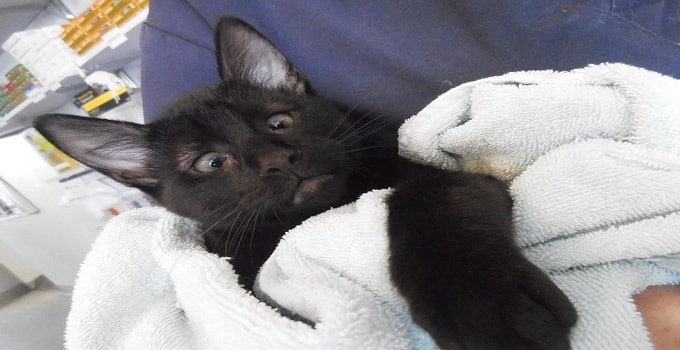 Cross-eyed Rescue Kitty Helps Other Furry Patients at Vet Clinic … and is Loved Dearly by all!