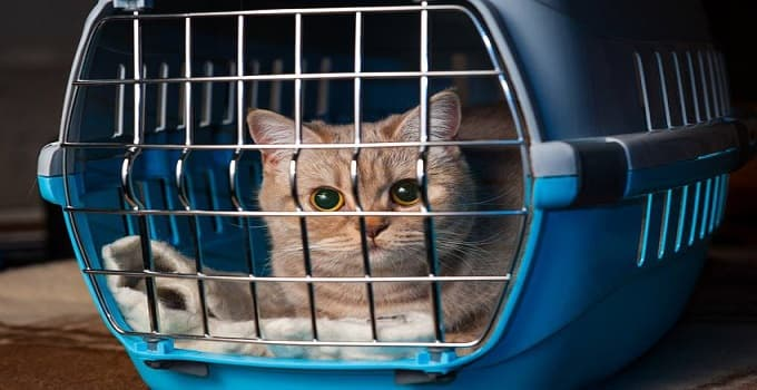 How To Make Taking Your Cat to the Vet Less Stressful and Disheartening