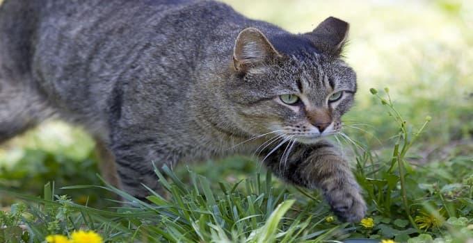 Animal Shelter in North Carolina to Start Barn Cat Program