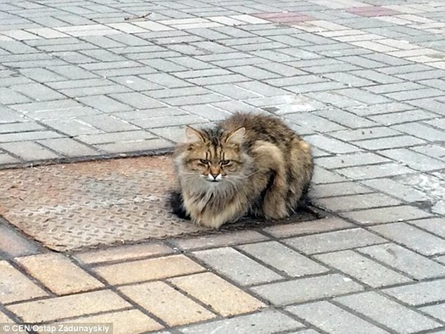 The lonely kitty was first photographed in 2015 on a manhole cover in Belgorod, in south-western Russia's Belgorod Oblast region.