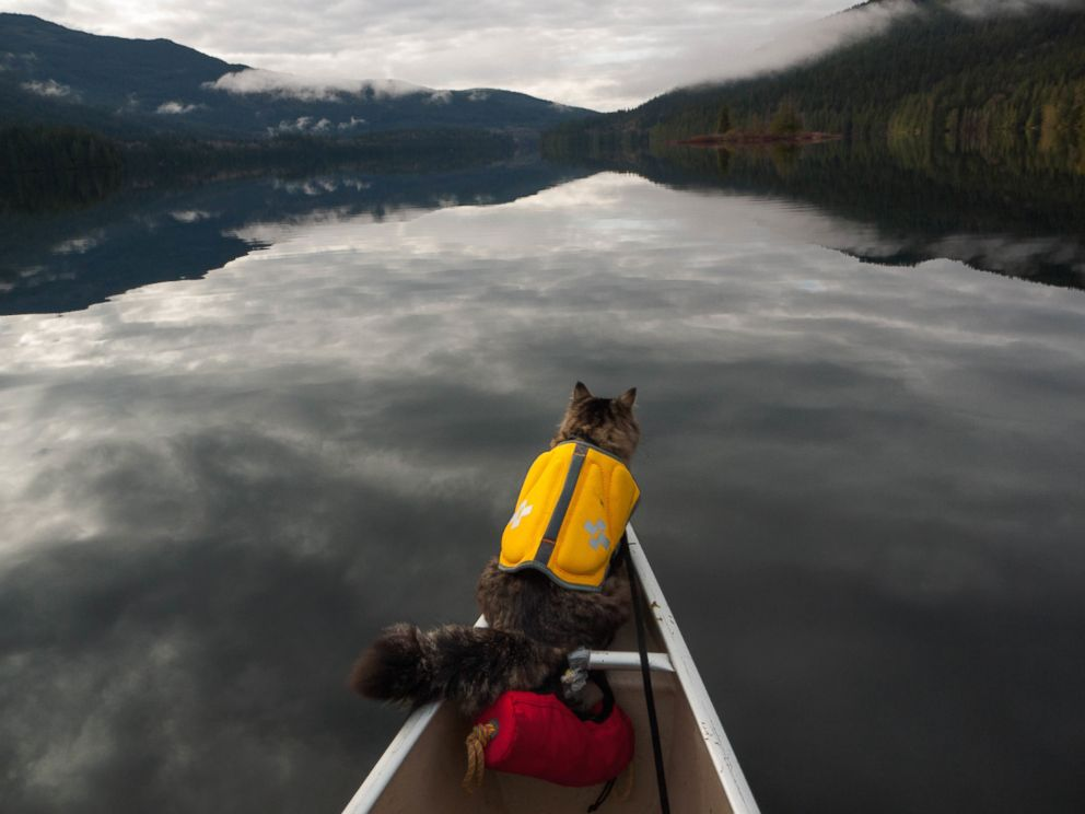 Bolt and Keel are rescue cats who've become Instagram darlings for their adventures in Canada's great outdoors.