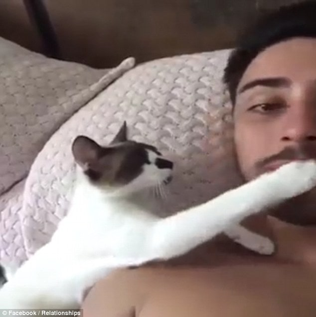 Needy: In the video the attention-seeking cat paws at its owner's face so that he'll turn around to face it