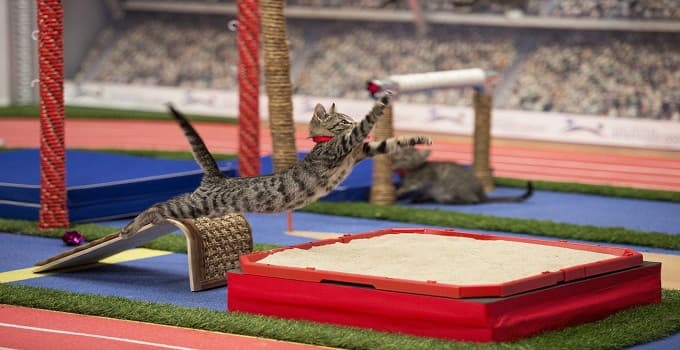 What Do the Kittens of Hallmark Channel's Kitten Bowl Do During Off Season? Find out here ...