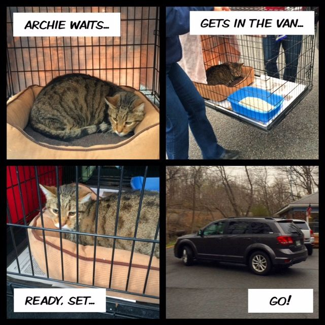 After 13 Years of Helping Other Cats in the Shelter, Archie Finally Finds His Forever Home!