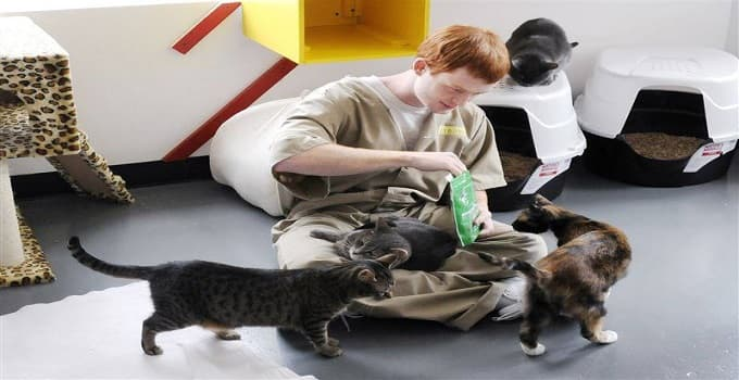 Cat Sanctuary at Pendleton Correctional … BEING EXPANDED!